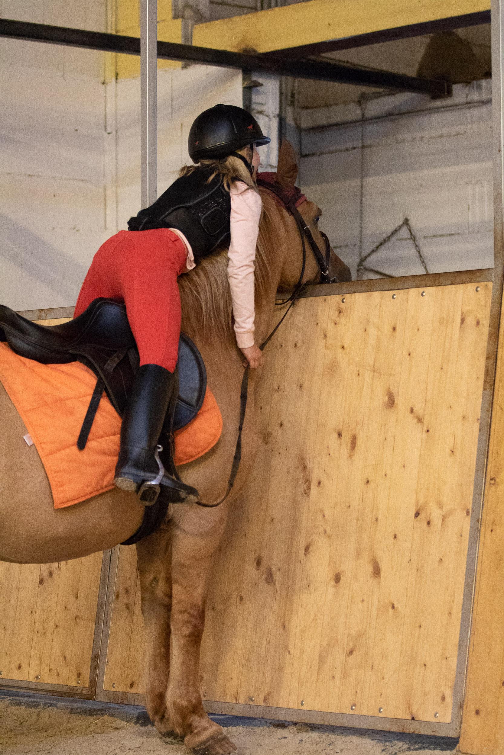 Pferde-001-5X6A8528