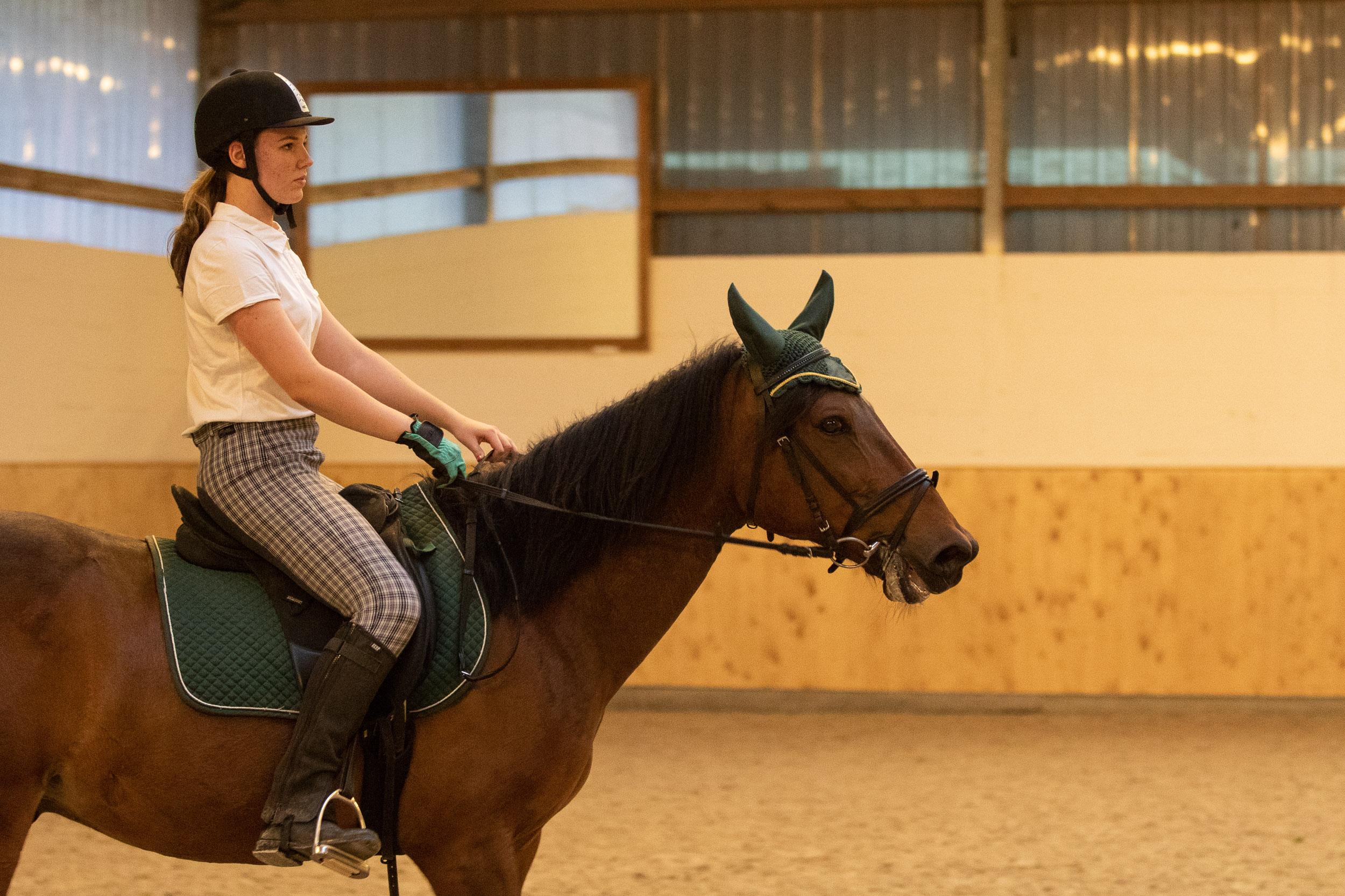 Pferde-001-5X6A8569