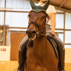 Pferde-001-5X6A8541