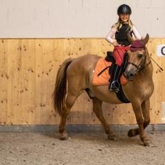Pferde-001-5X6A8643