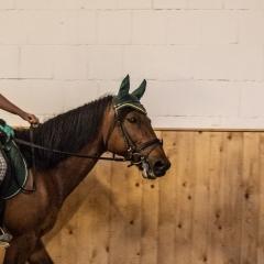Pferde-001-5X6A8570